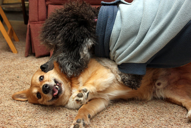 2/1 puppy love