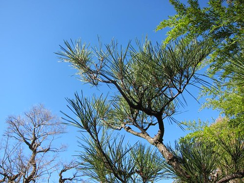 Hakone Japanese Gardens, Saratoga, CA IMG_2273