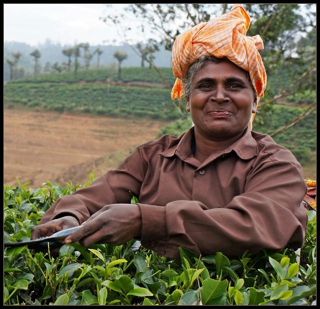 Tea Akka At Uralikal Estate