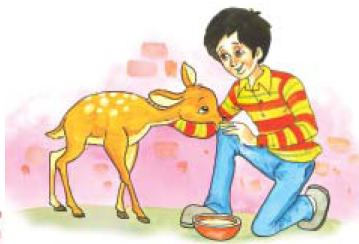 NCERT Class VIII English Chapter 6 This is Jody's Fawn