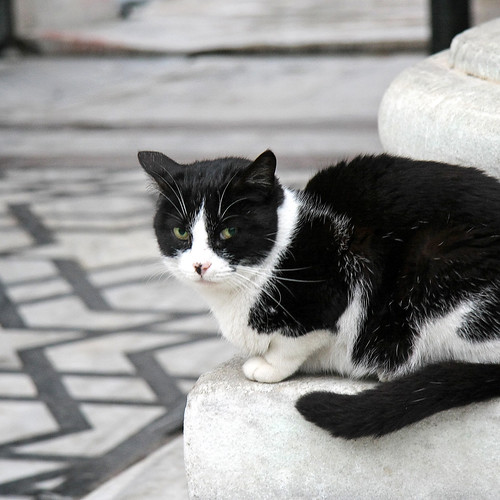 Black and white cat in black and white floor, Istanbul, Turkey イスタンブール、白黒の床と白黒の猫