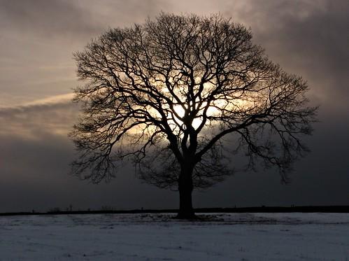 sunset snow treesilhouette solitude snowy derbyshire serenity bleak lonelytree derbyshiredales sydnopehill
