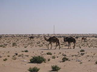 Camellous consideration - 2005-01-23 at 23-39-38