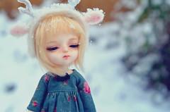 Snowy Fawn