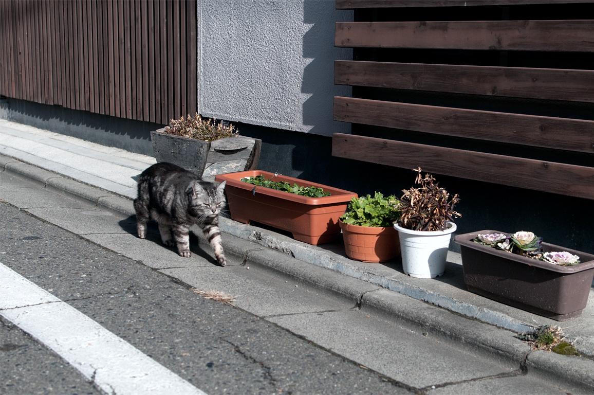 ネコ|長野県松本市