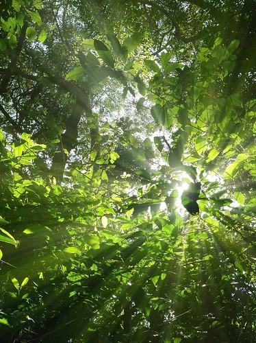 Rainforest vs Sunshine: 0-1
