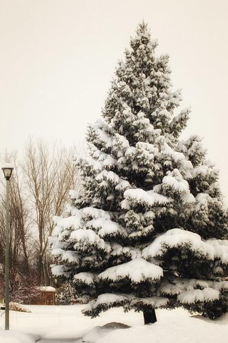 feb snow--2