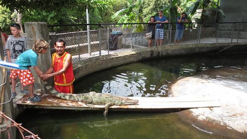 Koh Samui Crocodile Farm サムイ島 クロコダイルファーム (11)