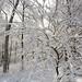 Winter Wonderland on Maple HIll