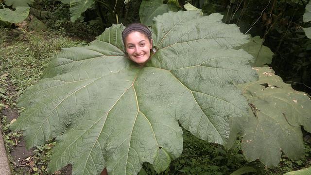 Student Traveler enjoying nature