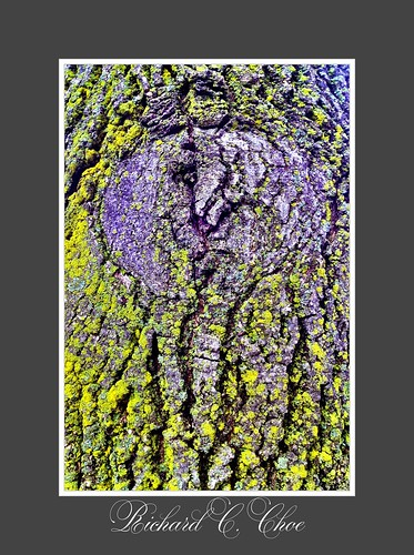 Tree 1 (2013, 2.23) by rchoephoto