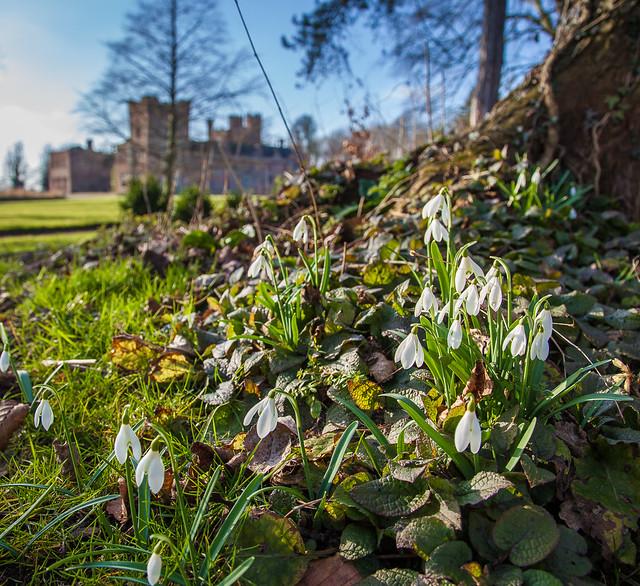 Oxburgh Hall Snowdrops