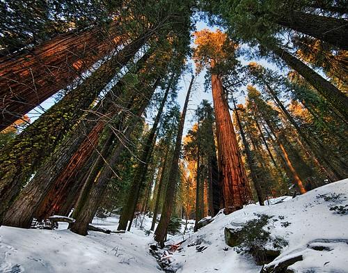 sunset nik sequoianationalpark ptgui congresstrail sequoiaforest nikond800e