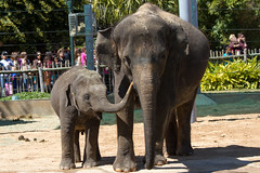 Elephants in the Houston Zoo