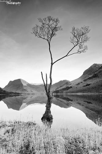 Buttermere Tree by Dave Brightwell
