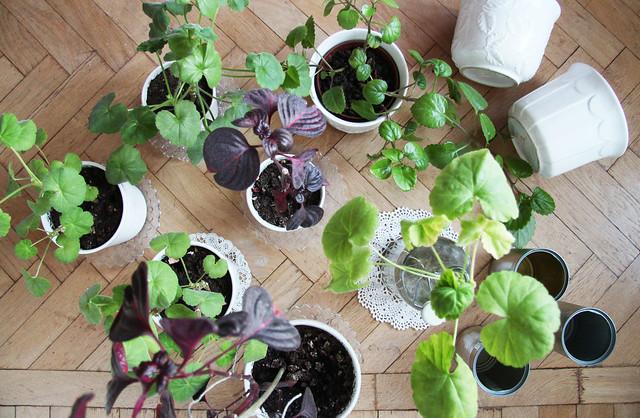 hejregina.blogspot.com blommor