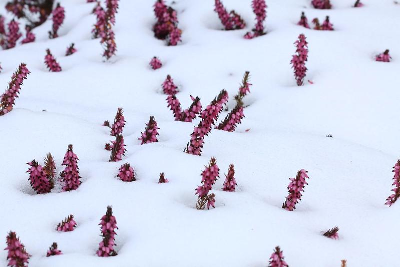 Vùng lên - tuyết ơi là tuyết