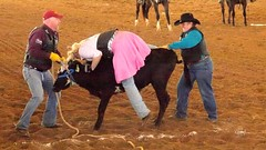 animal sports, rodeo, cattle-like mammal, bull, equestrian sport, tradition, sports,