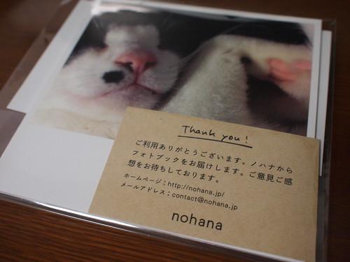 さんちゃん x nohana