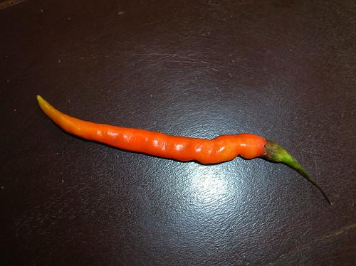 chili pepper!