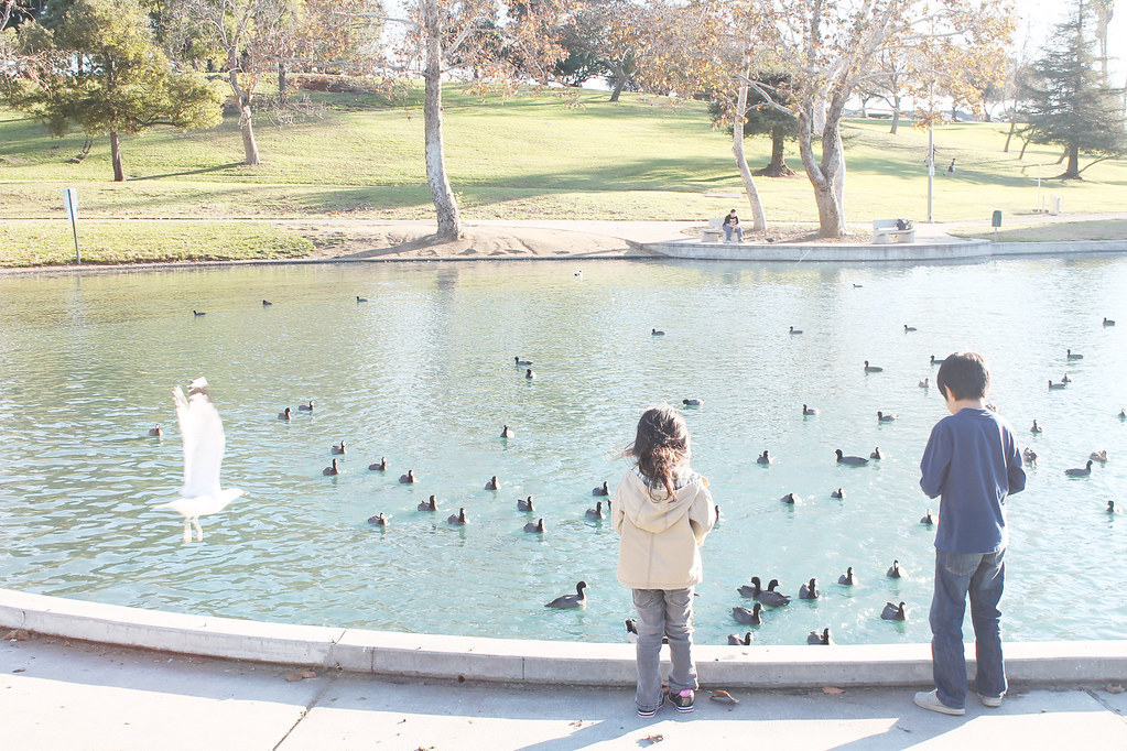 key and rock feeding ducks