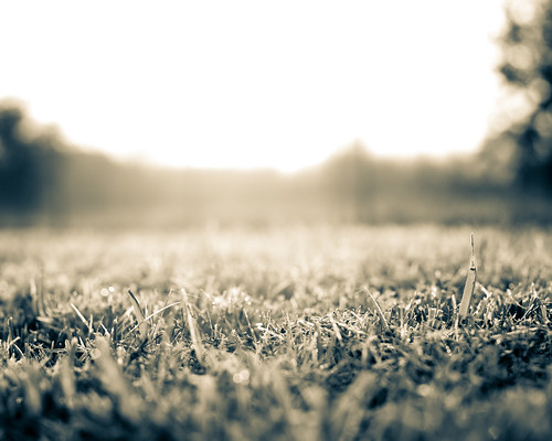 morning blackandwhite sun sunlight art grass sunshine landscape blackwhite soft texas unitedstates bokeh dew lensflare aftertherain f40 lakejackson splittone nikon50mm nikond600 pictureperfectmorning