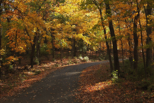 road blue autumn trees red orange green fall leaves yellow forest private solitude quiet nashville tennessee driveway wooded
