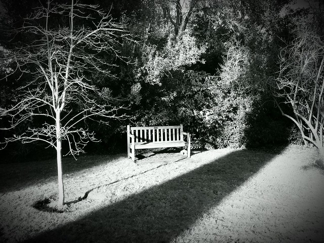 The Lonely Bench series