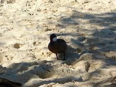 Sapphire Beach