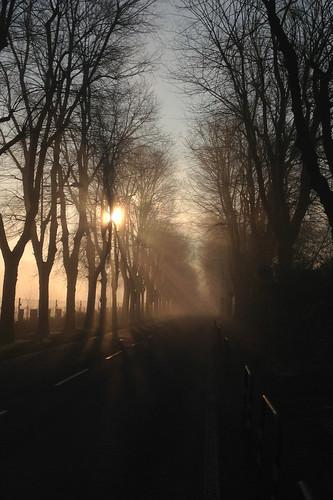 road trees light sun sunrise san milano eni donato milanese iphone5