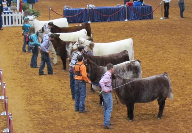 fw stockshow beef