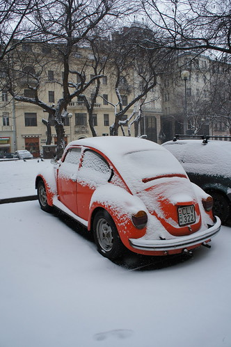 Bug in Snow