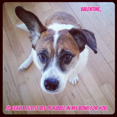 Dog Valentine #2