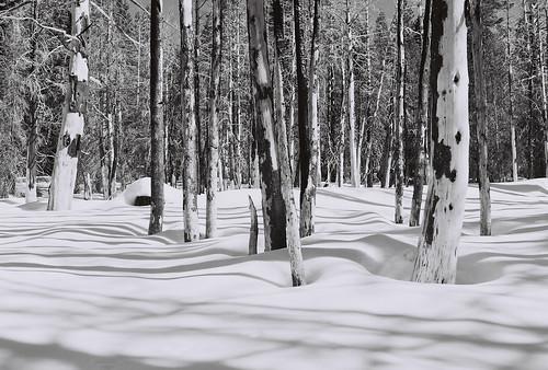 33/52 - Trees