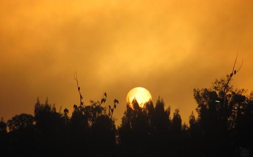 trees sunset sun night florida cloudy stuart peek rise peeking sunnrise stlucielockdam