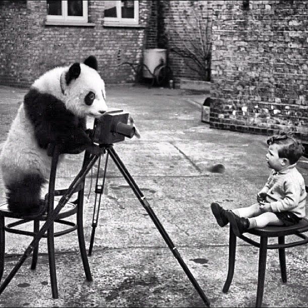 Ming The Panda photographed Bert Hardy's son, Mike, at London Zoo, December 1938. Photo by Bert Hardy.