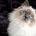 20130223 - Cats - Wolf Volga and Vanda - 12392.jpg by fabien heinis