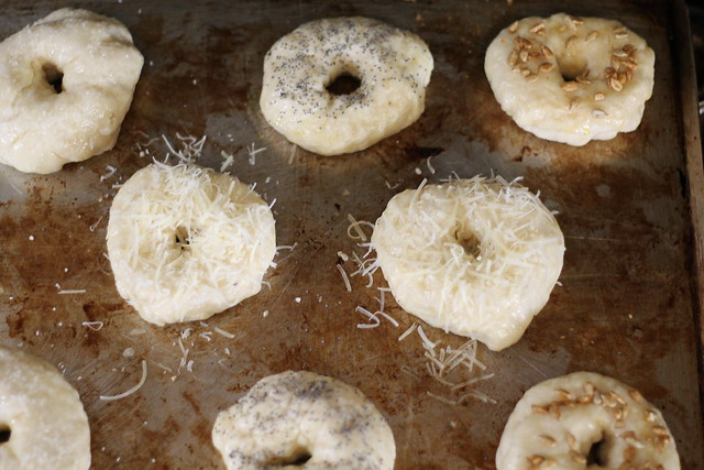 Recipe for homemade bagels four ways: salt, poppyseed, sunflower seed, and asiago