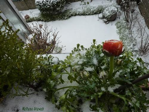 De glace & de neige