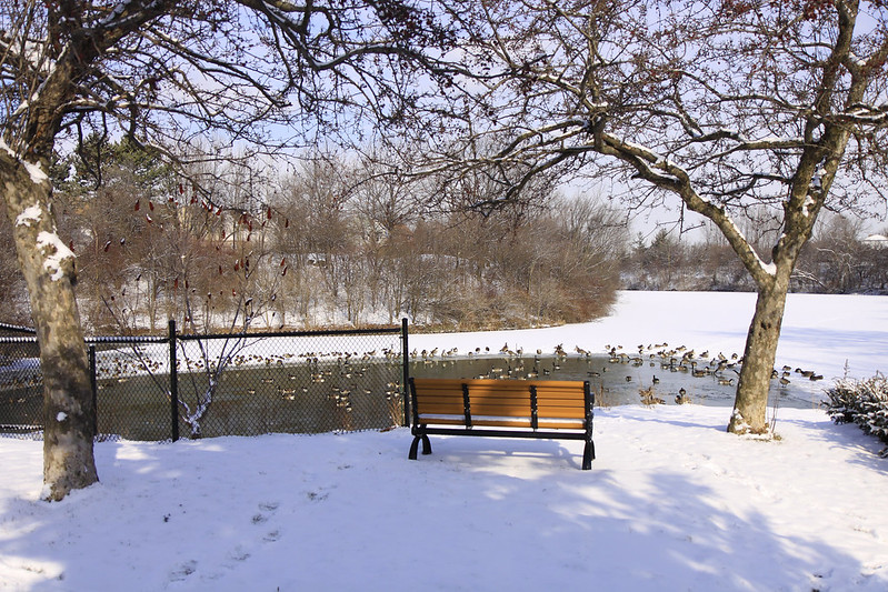 bench by pond