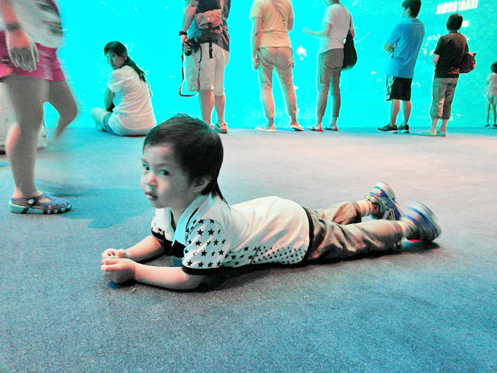 cute kid at S.E.A. Aquarium world's largest aquarium