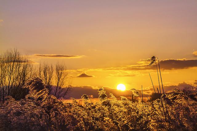 Zonsondergang boven het riet