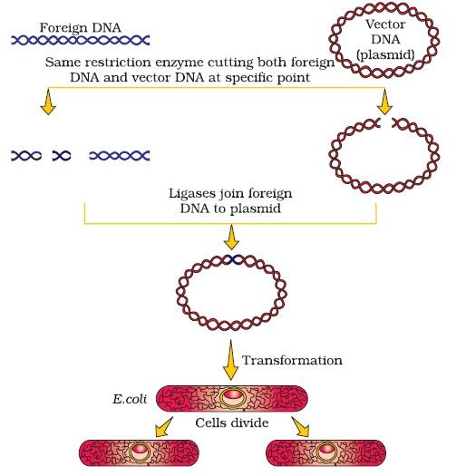 Remarkable plasmid vectors photographs