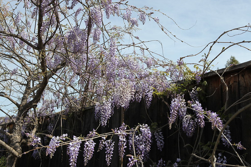 spring flower_039