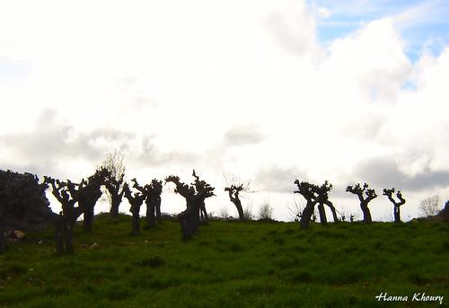 trees lebanon tree nature landscape arbres nuages paysage arbre liban لبنان jbeil منظر شجرة غيوم طبيعة غيم جبيل شجر غيمة مشمش mechmech