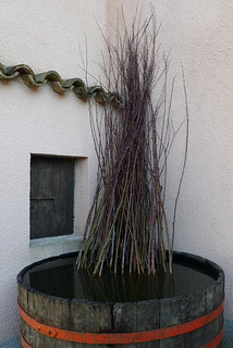 Soaking of bekve - white willow stems
