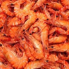 shrimp, animal, dendrobranchiata, caridean shrimp, crustacean, seafood, invertebrate, food, scampi,