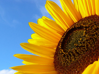 Sun Rose Sunday