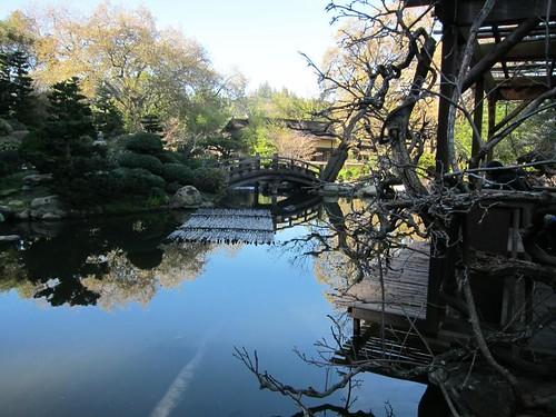 Hakone Japanese Gardens, Saratoga, CA, pond… IMG_2451