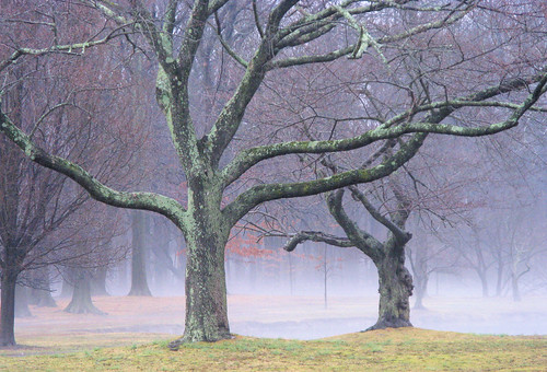 park morning trees winter fog landscape day nomahegan